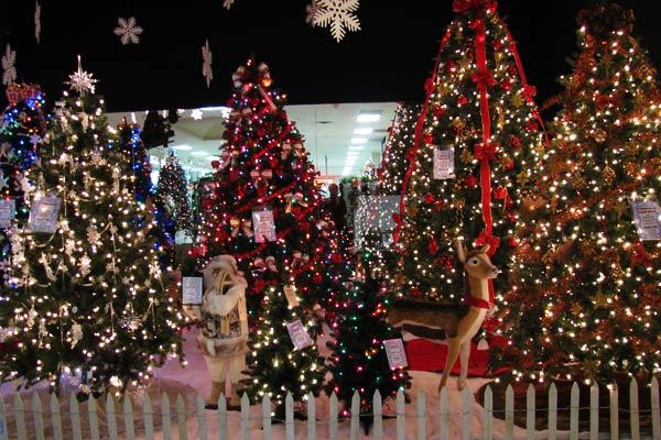 Come see over 30 true-to-life trees in our wondrous Christmas showroom.  Seasonal Specialty Stores ... - Artificial Christmas Trees - Seasonal Specialty Stores, Foxboro
